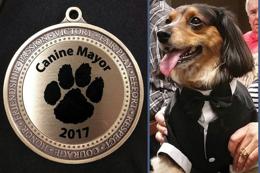 Meet Max, our 2017 Canine Mayor
